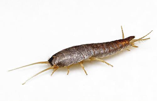 Откуда в ванной комнате берутся насекомые. Насекомые в ванной: фото и названия