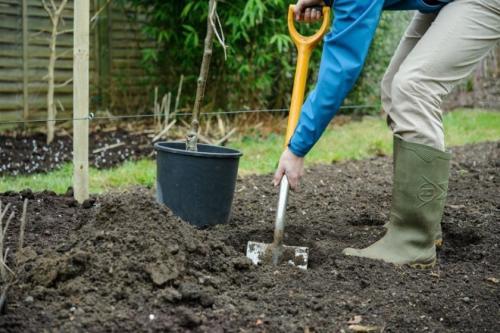 Как посадить осенью яблоньку. Когда сажать яблони осенью