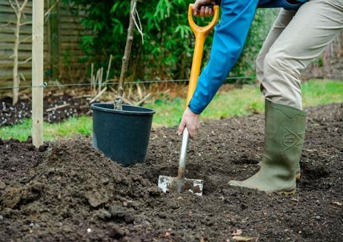 Как посадить саженец яблони. Посадка саженцев яблонь: осень или весна?